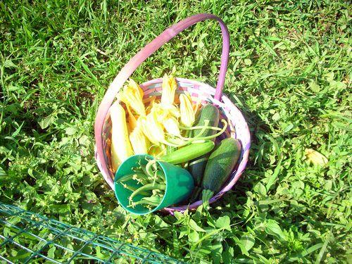 Morningharvest