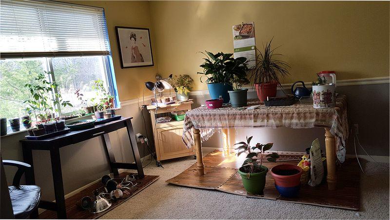 Plantroom