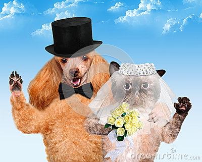 Cat-dog-wedding-getting-married-41538689